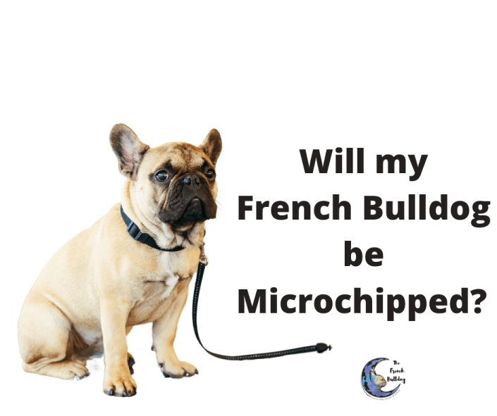 Will my French Bulldog puppy be microchipped?