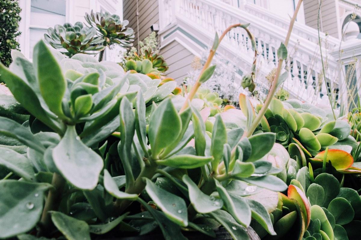 plantes san francisco