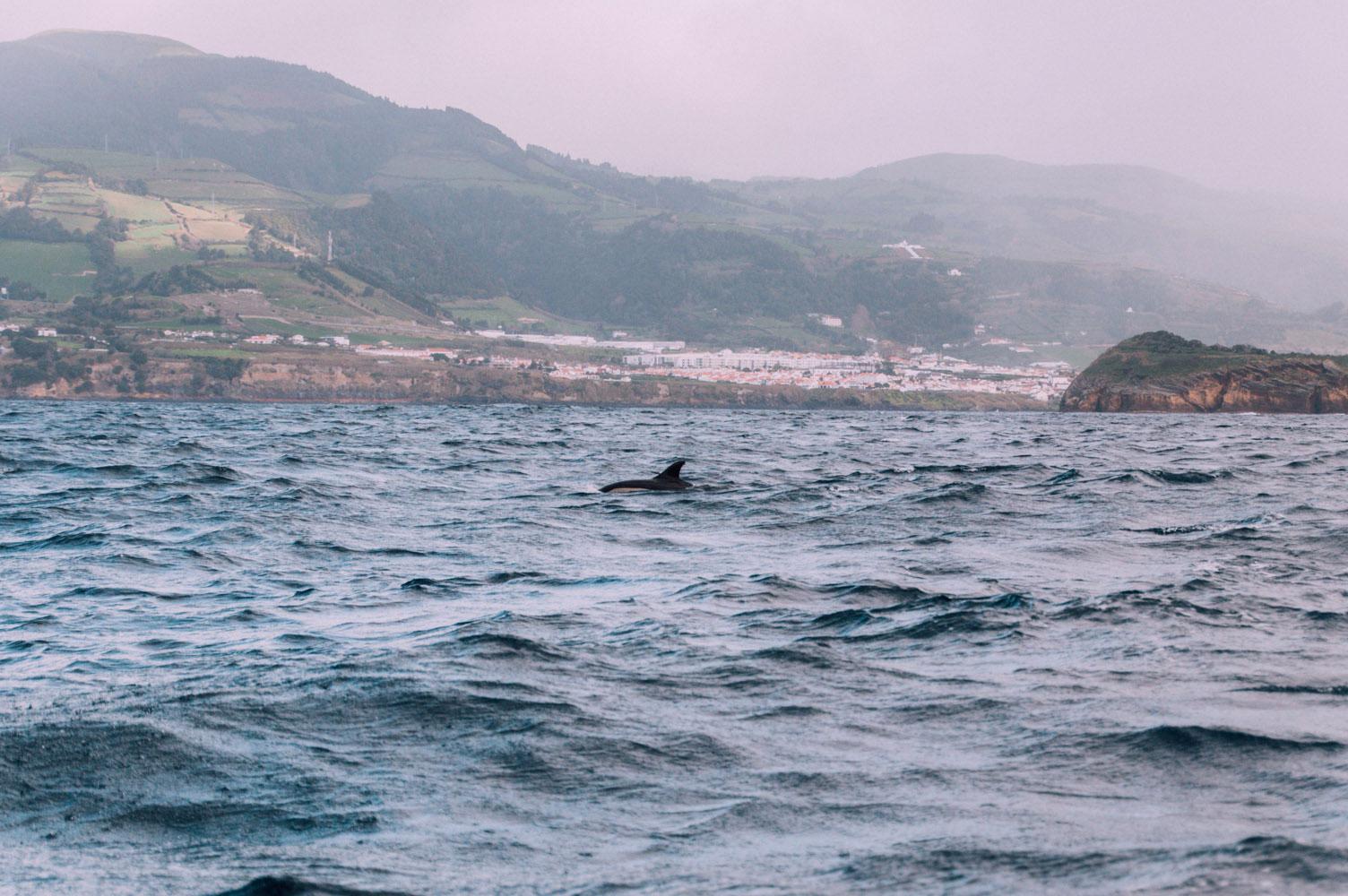 voir dauphin à sao miguel