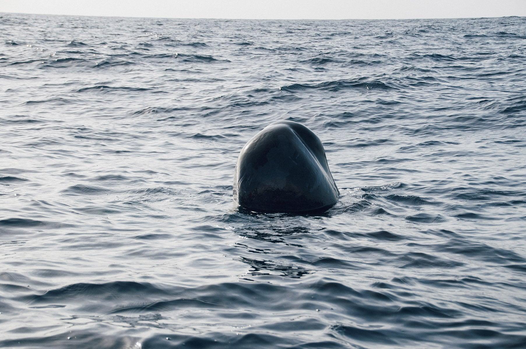 voyage açores baleine