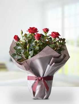 Succulent Desert Roses