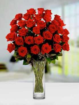 My Darling Roses