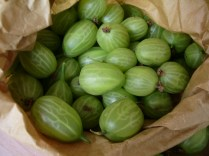Gooseberries_2
