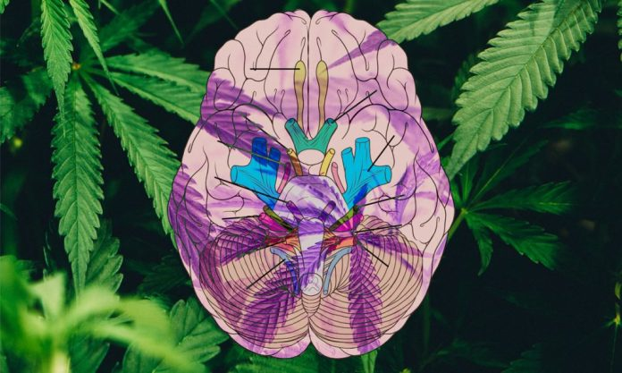 new clinical trail aims to determine if cbd helps recovery from traumatic brain injury