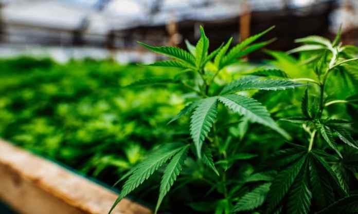 Legal Weed Is Making An Impact On The Billion Dollar Sleep Market