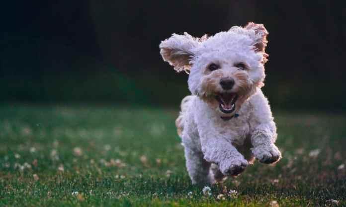 People Keep Naming Their Dogs After Marijuana Terms