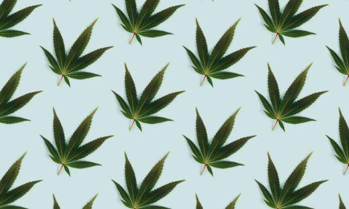 DEA Doesn't Want You To Worry About Its New Hemp Rule—Don't Take the Bait!