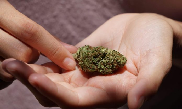 Study Finds Cannabis Use At Any Age Can Ruin People's Lives