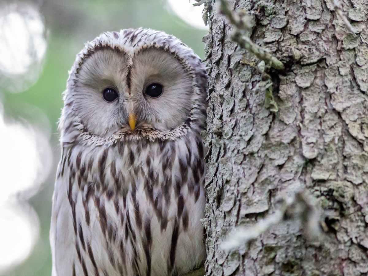 white and black owl on tree