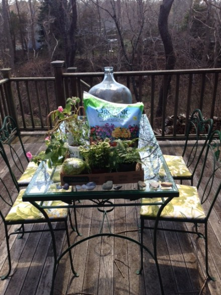 How to: Terrarium - The Friendly Fig