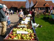 Cressing apples 2015