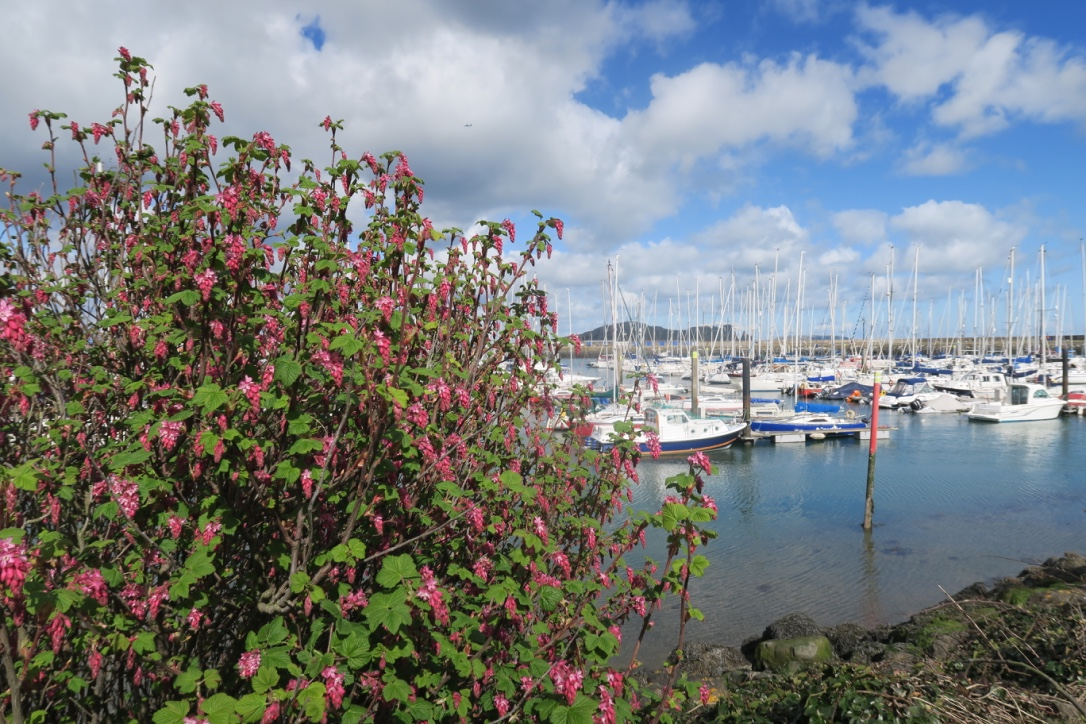 barchette-a-howth-irlanda-the-frilly-diaries-