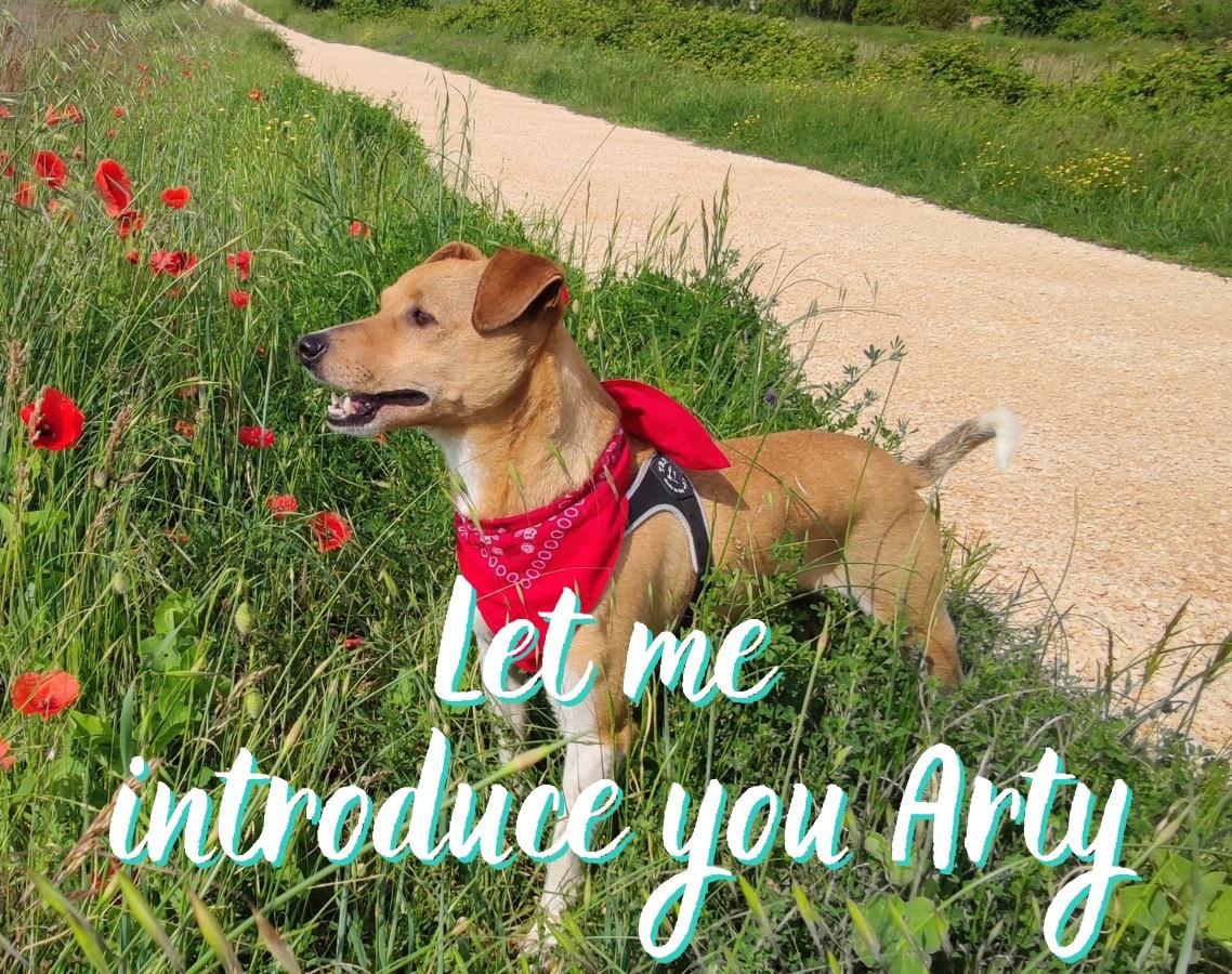 Adopting a dog has incredibly changed my life