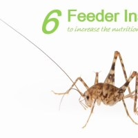 6 Types of Feeder Insects