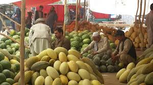 Samangan farmers happy with fruits income