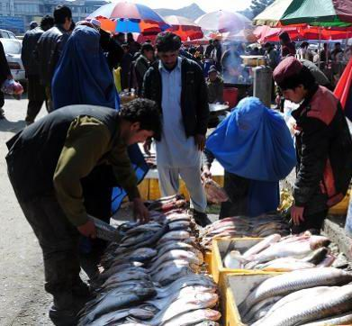 Cooked fish meat sold in Kabul without hygiene checked