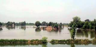 Okara 71 villages, hundreds acres crop inundated after breach in River Sutlej's safety dyke