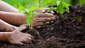 Fighting climate change with plantation
