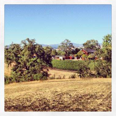 I like wine & wine country