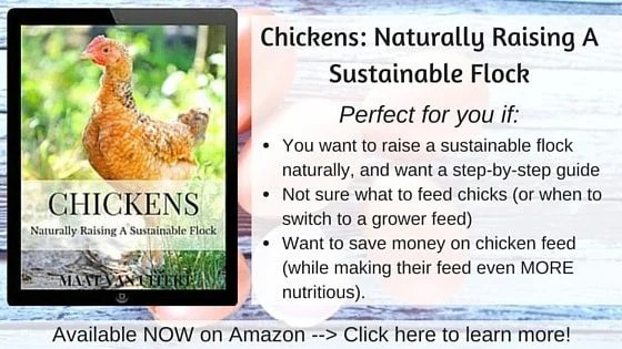 chickens naturally raising a sustainable flock admin - Chicken Manure
