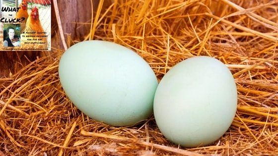 5 Supplements For Healthier Eggs That Yield BIG Results For YOUR Health [Podcast]