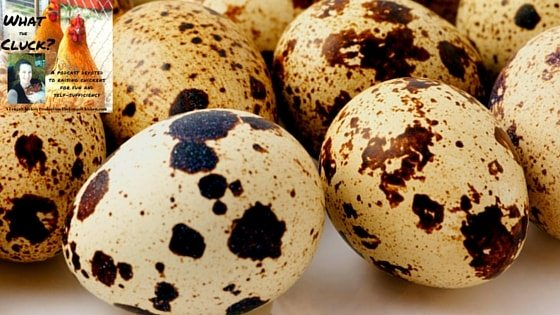 4 Types Of Poultry You Can Raise With Hens To Be More Self-Sufficient [Podcast]