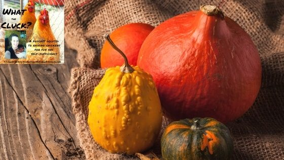 Fall In Love With Feeding Pumpkins To Your Chickens + Fall Coop Spray Recipe! [Podcast]