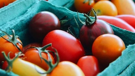 5 Easy Vegetables You Can Grow to Save on Your Groceries