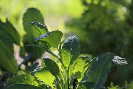 5 vegetables you can grow to save money on groceries
