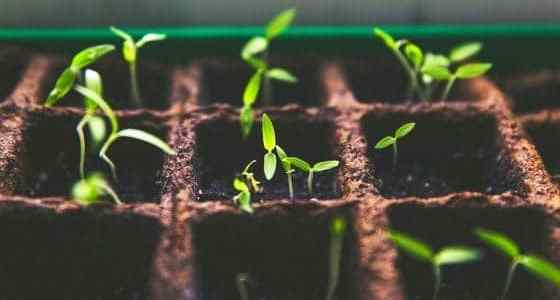 what seedlings can you start in march