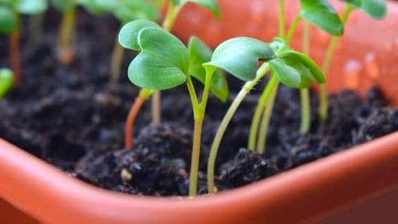 12 Vegetables You Can Start Now In Cold Frames! [Planting Guide!]