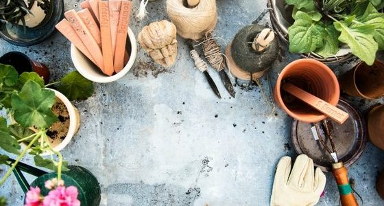 What to do In Your Garden In March Zones 3-10