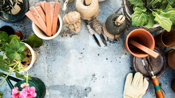 What To Do In Your Garden In March Zones 3-10! [Planting Guide]