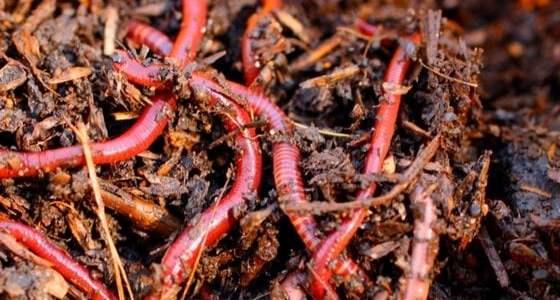 Build a worm compost bin for free garden fertilizer!