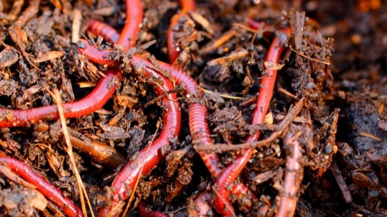 Worm Compost Bins: Here's How We Used Worms To Get The Best Free Garden Fertilizer We've Ever Seen
