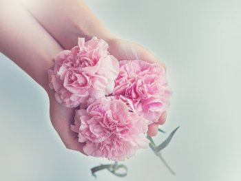 pink-beautiful-flowers-held