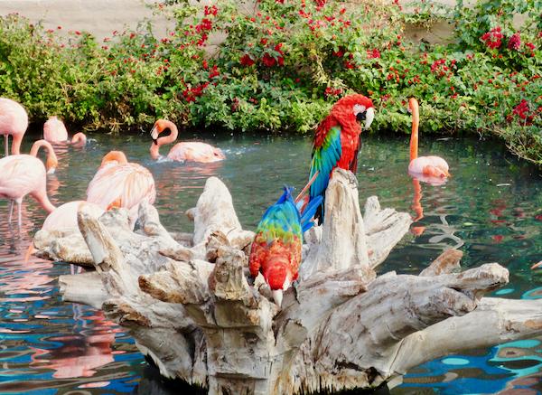 Phoenix Wildlife Zoo