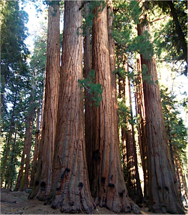 Sequoia National Park Travel Tips