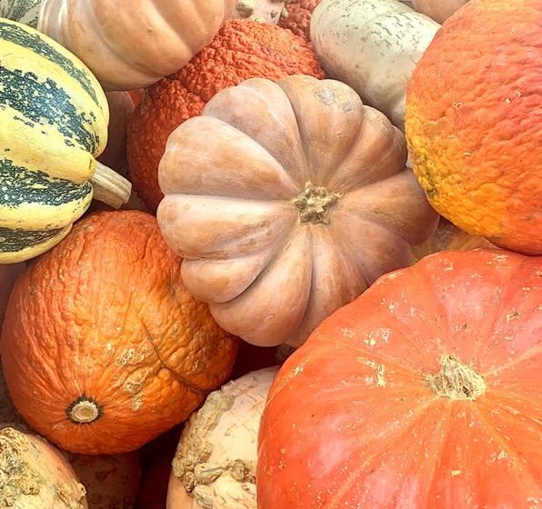 Pumpkin Growing Tips