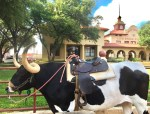 Dallas Fort Worth Travel Tips
