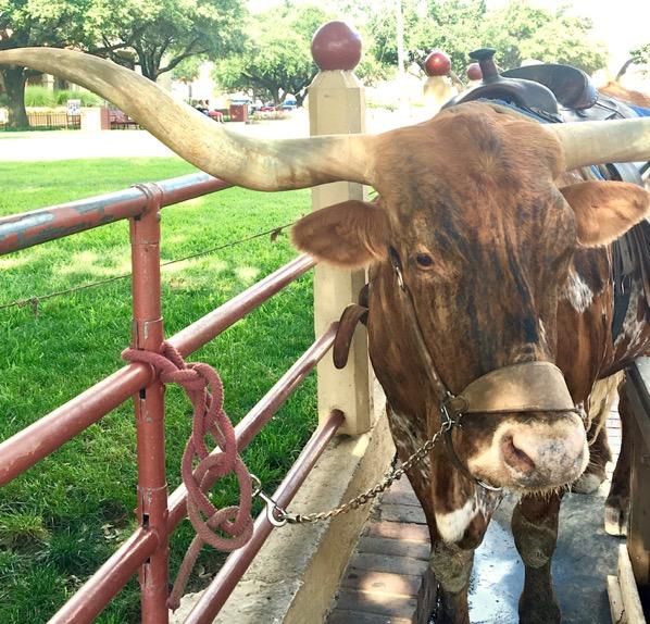 Forth Worth Stockyards Rodeo
