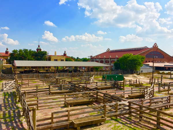 Fort Worth Stockyards and Rodeo by TheFrugalGirls.com