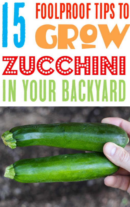 Zucchini Garden Tips - Easy Gardening Ideas to Grow Your Best Zucchini on a Vertical Trellis or Raised Beds