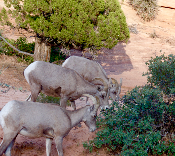Zion National Park Wildlife from TheFrugalGirls.com