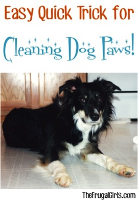 Quick and Easy Trick for Cleaning Dog Paws