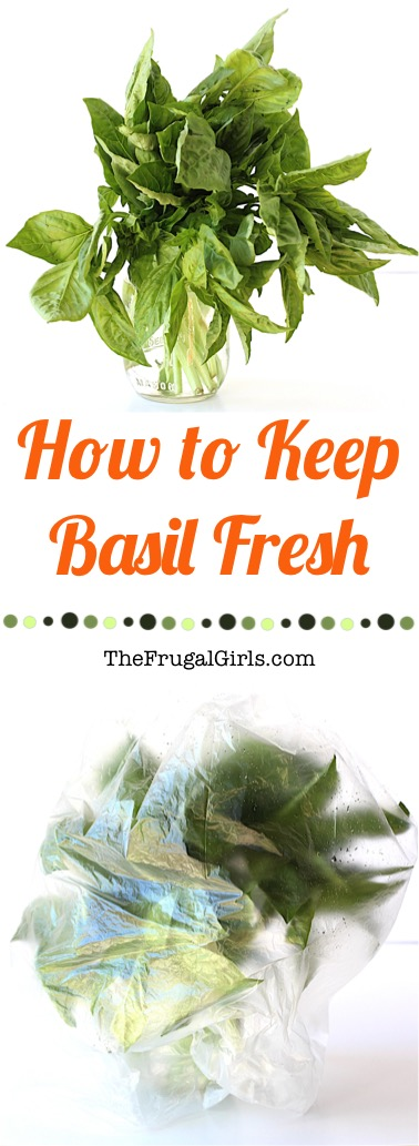 How to Keep Basil Fresh - Tip from TheFrugalGirls.com