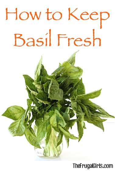 How to Keep Basil Fresh - at TheFrugalGirls.com