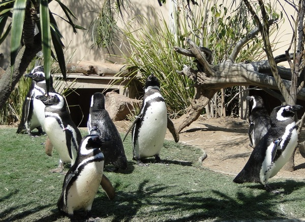 Sea World Attractions Penguins