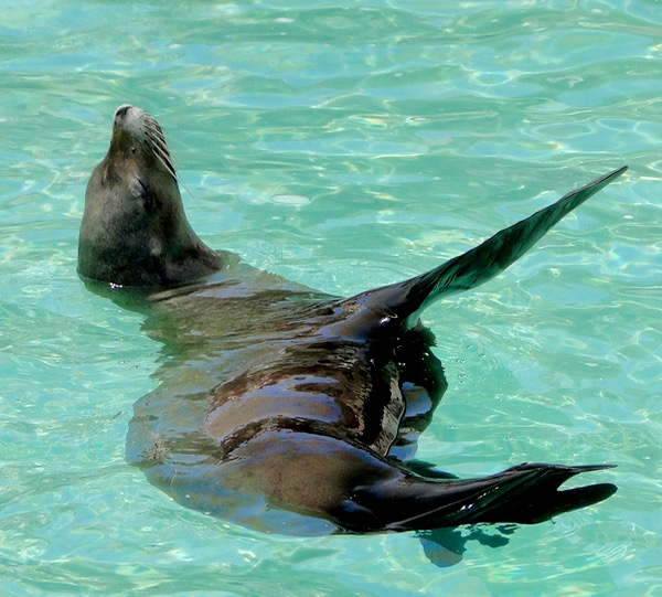 SeaWorld Top 10 Things to Do Sea Lions