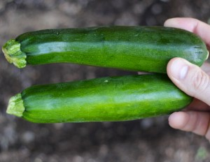 69 Best Vegetable Gardening Tips from TheFrugalGirls.com